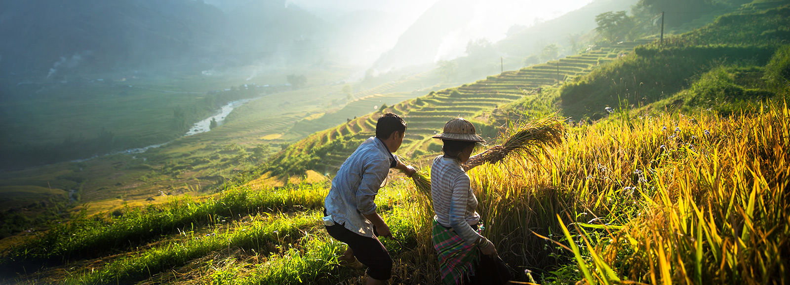 Man and woman harvesting rice in Sapa (Image © Tim Gerard Barker/Getty Images)